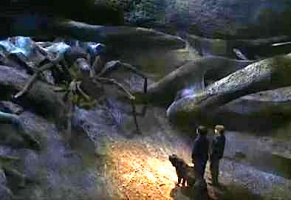 Harry, Ron, and Fang meet Aragog