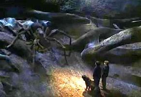 Harry, Ron, and Fang meet Aragog