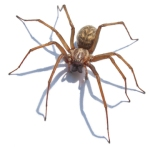 giant_spider_1_by_jantiff_stocks