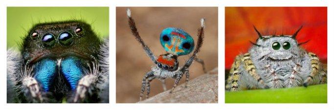 spidercollage