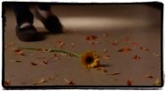 Jemma finds flowers