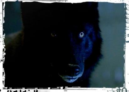 Black wolf Teen Wolf Parasomnia