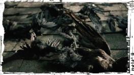 Ravens Teen Wolf Parasomnia