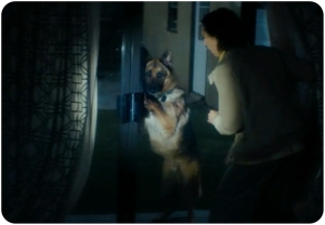 Dog Fear the Walking Dead Season The Dog