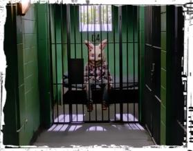 Bunny in jail Supernatural Plush