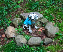 Lily Dale Pet Cemetery dalmation