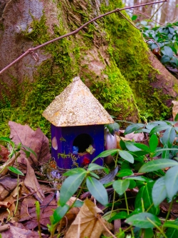 lily-dale-fairy-trail-2-blue-house-gold-roof