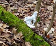 lily-dale-fairy-trail-3-unicorn